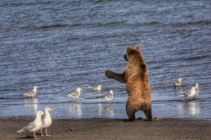 The Bears frequently stood up on their hind legs.