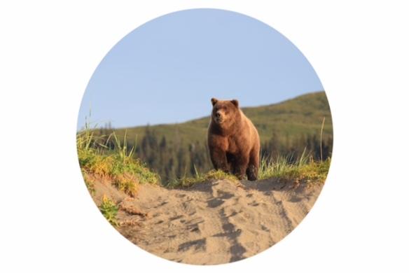 bear circle
