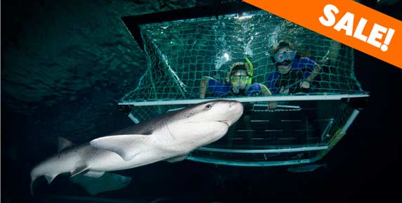 shark-cage-sale