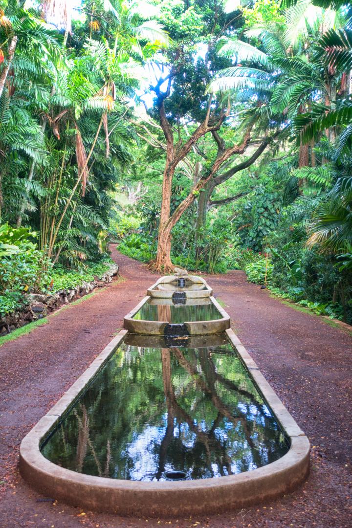 Allerton Garden Photo Tour Kauai Island KIWIGRAN my